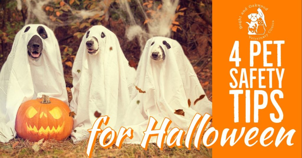 4 Pet Safety Tips for Halloween