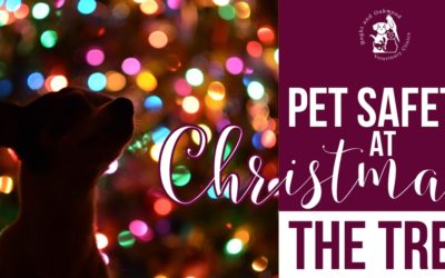 Pet Safety at Christmas: the Tree