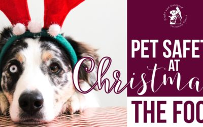 Pet Safety at Christmas: the Food