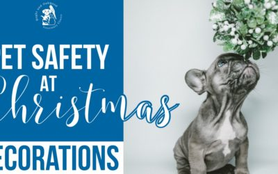 Pet Safety at Christmas: Decorations