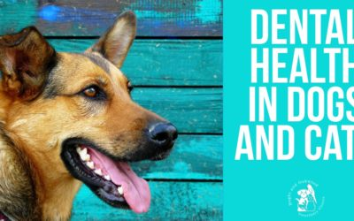 Dental Health in Dogs and Cats