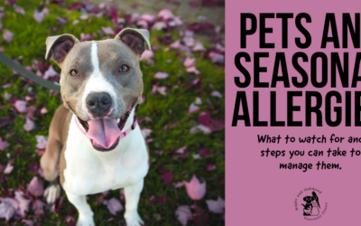 Pets and Seasonal Allergies