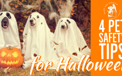 4 Halloween Pet Safety Tips
