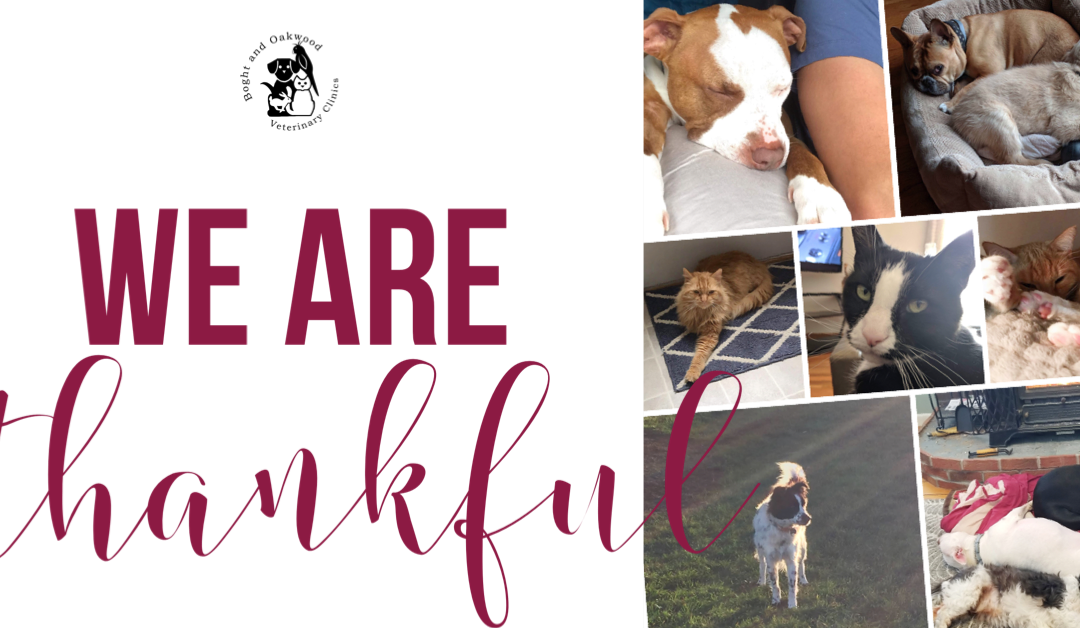 We are Thankful…