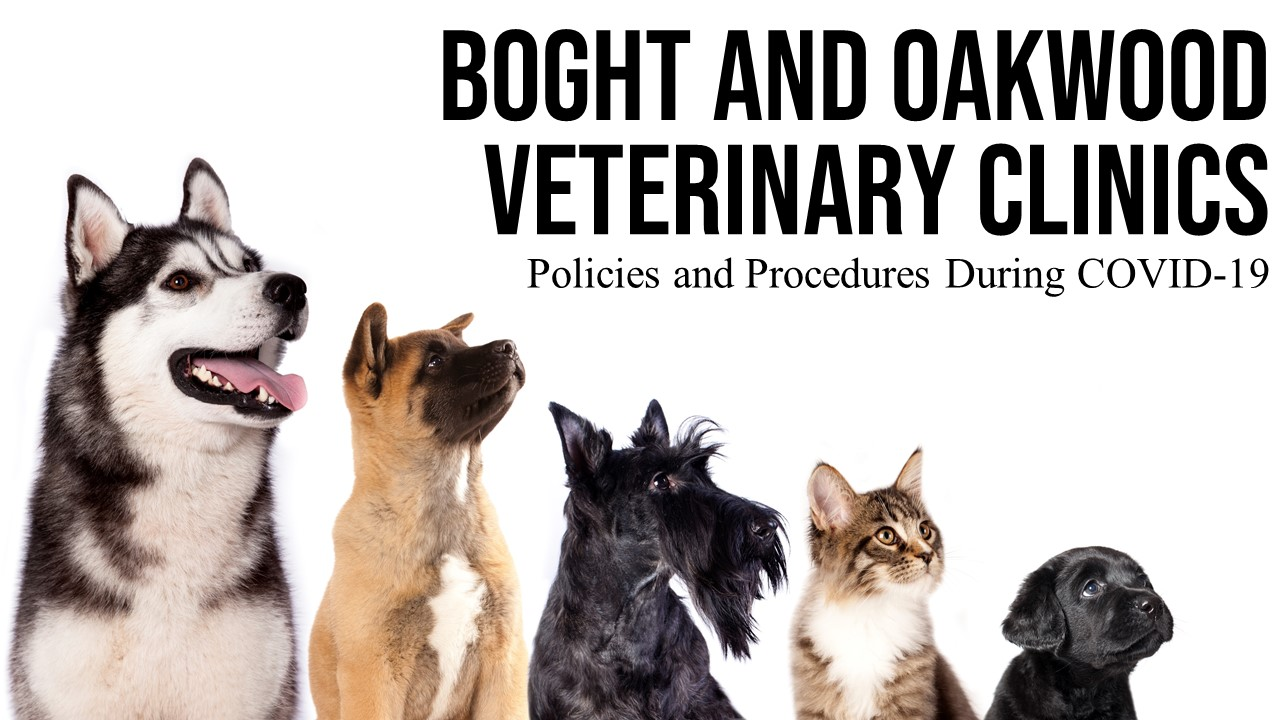 image of dogs and a cat with the text Boght and Oakwood Veterinary Clinics Policies and Procedures During COVID-19